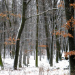 Woods in winter time... - Stok fotoraf