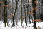 Woods in winter time... — Stock Photo