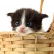 Kitten inside a basket — Stock Photo