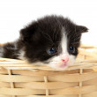 Kitten — Stock Photo #28141773