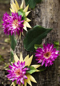 Artificial flower on old wood  — Foto de Stock