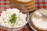 Cottage cheese. Curd — Stockfoto