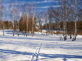 Winter landscape in central Russia — Stock Photo