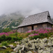 Mountain wooden hut — Stock Photo #42222905