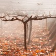 Autumn Vineyard. Mendoza — Stock Photo