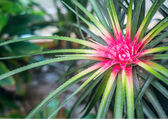 Bromeliad in tropical forest — Stock Photo