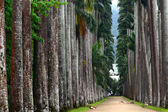 The Palm alley in The Botanical Garden in Rio de Janeiro — Stock Photo