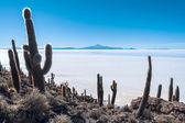 Isla de Pescadores, Salt lake Uyuni in Bolivia — Stock Photo