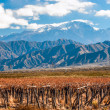 Stock Photo: Volcano Aconcaguand Vineyard. Argentine province of Mendoza