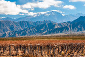 Volcano Aconcagua and Vineyard. Argentine province of Mendoza — Stock Photo