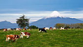 Idyllic landscape of Osorno Volcano, Lake Region, Chile — Stock Photo