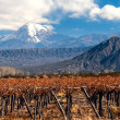 Stock Photo: Volcano Aconcaguand Vineyard. Argentina
