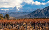 Volcano Aconcagua and Vineyard. Argentina — Stock Photo