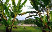 Ecuador as it is: the Amazonia, the sky and bananas — Stock Photo