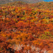 Autumn Colors of Patagonia, near Bariloche, Argentina — Stock Photo #47440997