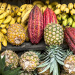 Cocoa surrounded by other tropical fruits — Stock Photo
