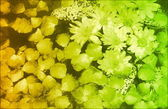Fancy Floral Grunge Background — Stock Photo