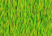 Green Grass Patch Background — Stock Photo