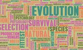 Evolution — Stock Photo