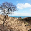 Cape Naturaliste — Stock Photo
