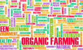 Organic Farming — Stock Photo