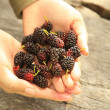 Stock Photo: Handful of Berries