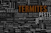 Termites — Stock Photo