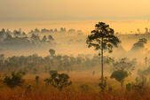 Landscape of forest in the morning — Stock fotografie