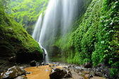 Madakaripura Waterfall-Deep Forest Waterfall in East Java, Indon — Stock Photo