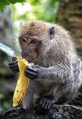 Monkey and banana — Stock Photo