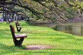 Outdoor park — Stock Photo