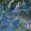 Spiderweb with droplets of water — Stock Photo