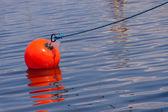 Orange boj — Stockfoto