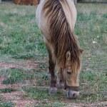 Horse — Stock Photo #32606477