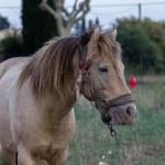 Horse — Stock Photo #32606525