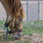 Horse — Stock Photo #32606555