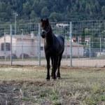Horse — Stock Photo #32606765