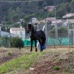 Horse — Stock Photo #32606779