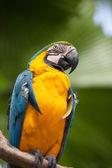 Parrot 2 — Stock Photo