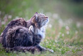 Cat in a grass 2 — Stock Photo