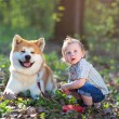 Boy and dog - Stock fotografie