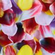 Stock Photo: Petals of tulips