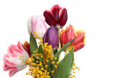 Tulips and mimosa — Stock Photo