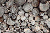 Pile of wood logs — Stock Photo