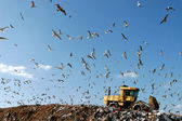 Landfill Working — Stock Photo