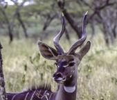 Antelope at Lake Tana Ethiopia Africa — Stock Photo