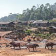 Stock Photo: Ethnical minority village with water bufallos in Laos