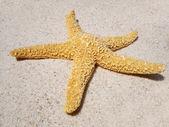 Estrela do mar na praia — Fotografia Stock
