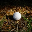 Stock Photo: Golf Ball in Rough