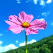 Pink summer flower on a mountain with beautiful sky — Stock Photo